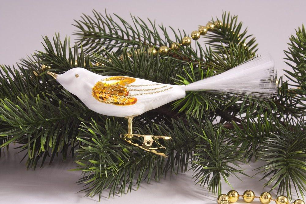 1 Vogel Eisweiss mit Orange und Gold