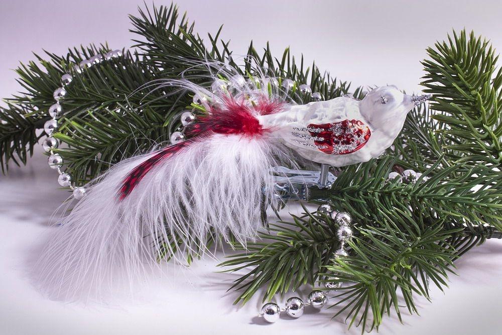 kleiner Vogel Eisweiss mit rot mit roter Feder