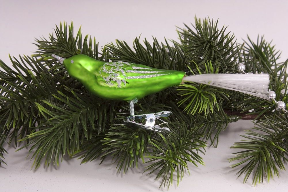 1 Vogel kiwigrün mit iris