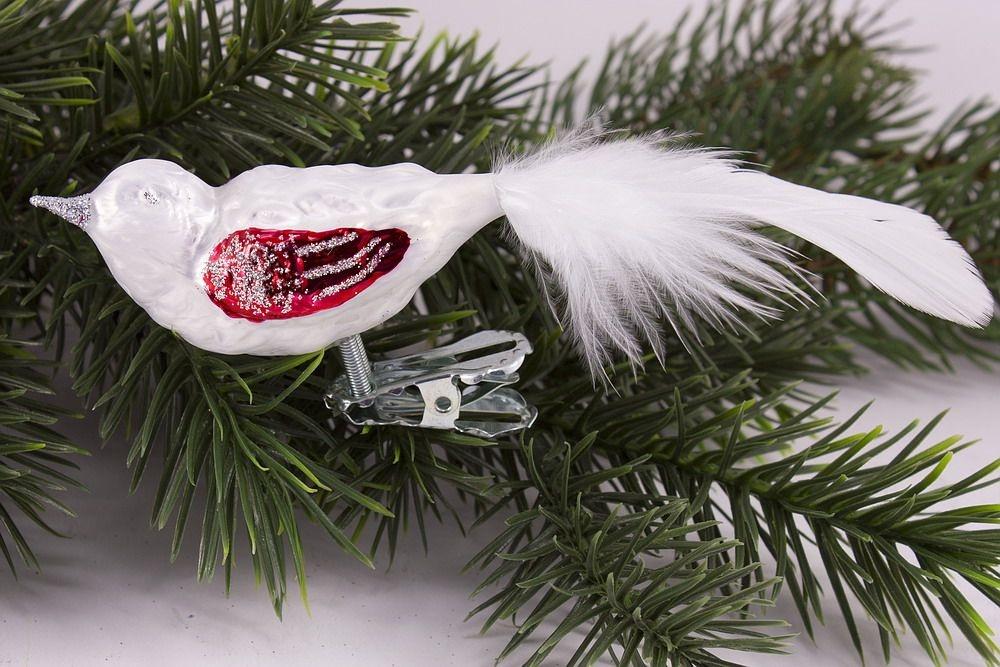 kleiner Vogel Eisweiss mit rot